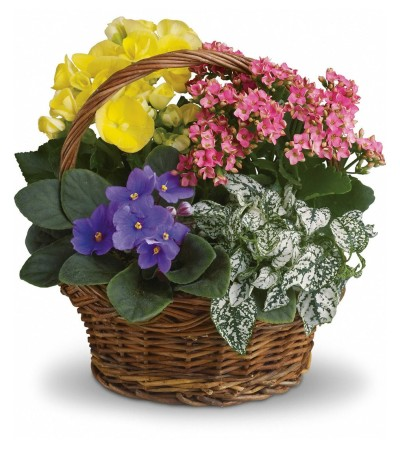 Mixed Blooming Basket