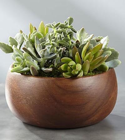 Simple Beauty Succulent Garden