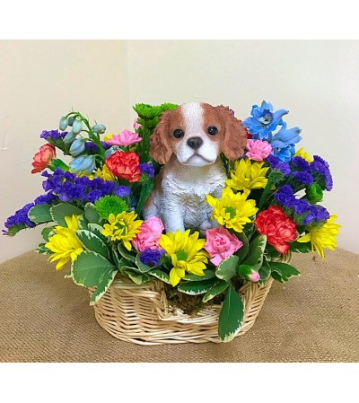 King Charles in a Basket