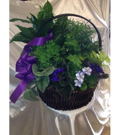 violet in garden