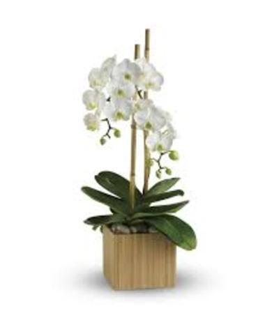 TF Opulent Orchids
