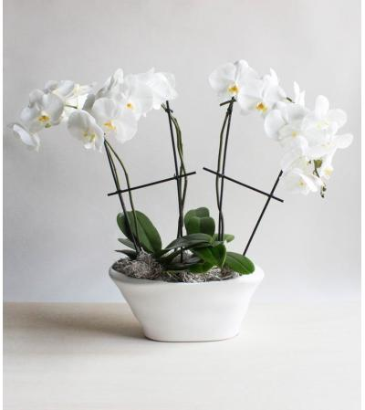 Stunning Orchid Display