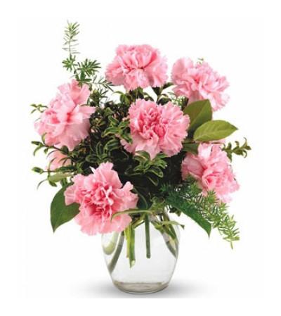 6 Pink Carnations in vase
