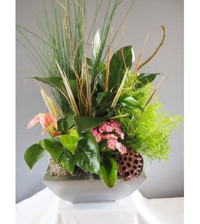 Blooming Plant Arrangement
