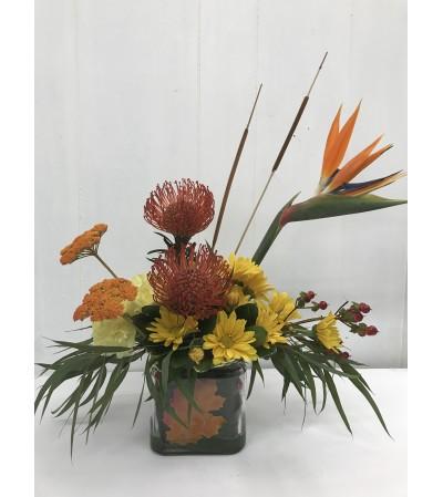 Proteas in Autumn