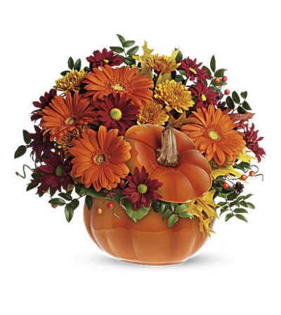 Pleasing Pumpkin T175-1
