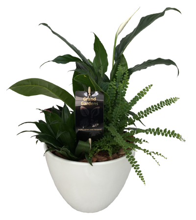 The Peace Lily Planter