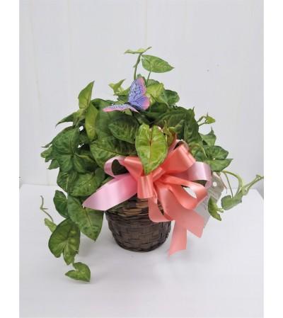 pothos plant in basket