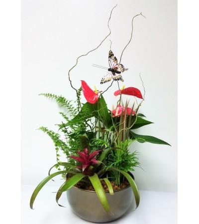 Plant Perfection