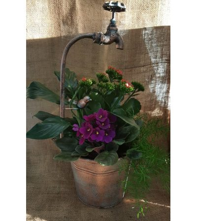 The Faucet Container Blooming