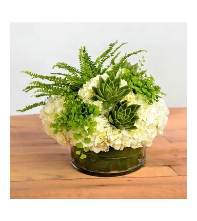 WHITE HYDRANGEA WITH FERNS AND SUCCLULENTS