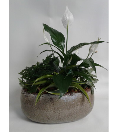 Peace Lily Boat