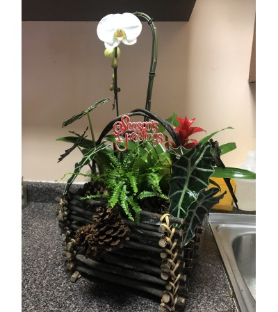 Large Mix Plants with Orchid