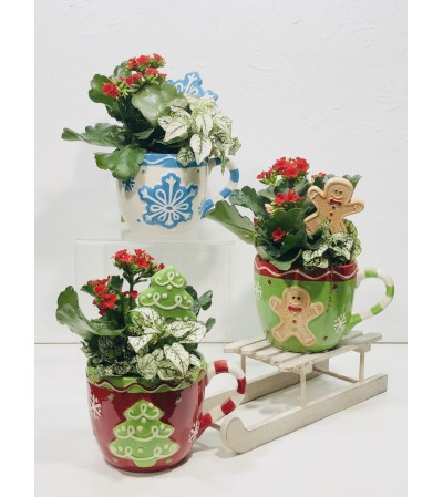 Mug O' Plants