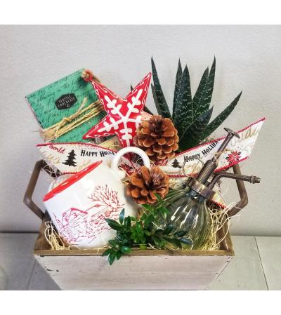 Succulent Lover's Holiday Blooming Box