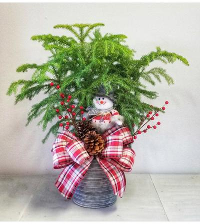 COUNTRY NORFOLK PINE TREE