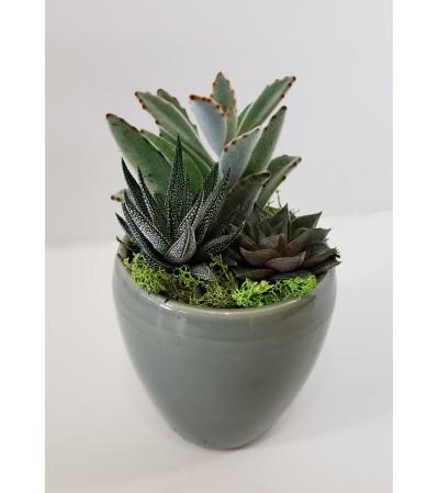 Mini succulent sampler