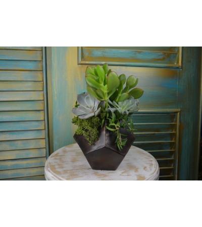 Savvy Succulent