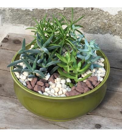 Succulent Garden - Medium