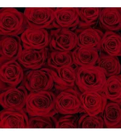 Rosaprima 12 Premium long stem red roses  in a vase