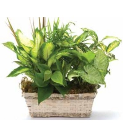 Planter - Small Dish Garden 705C