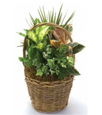 Planter - Tall Basket 713B