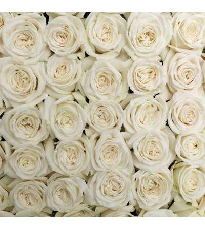 2 doz. premium white rosa prima roses in a vase