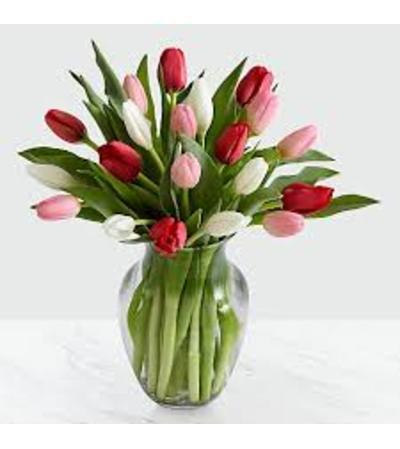 Sweet Tulips!