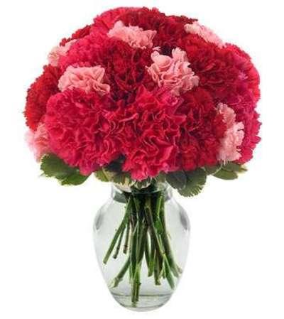 Very Berry Carnation