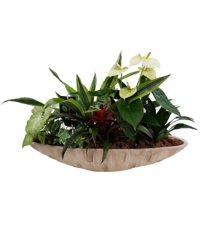 Oval Tropical Planter