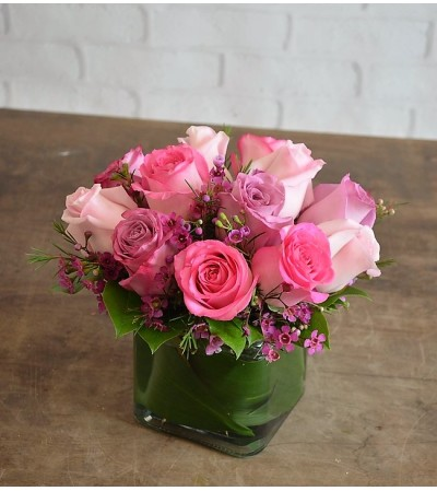 Roses-Maggie