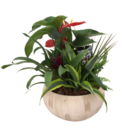 Blooming Anthurium Garden
