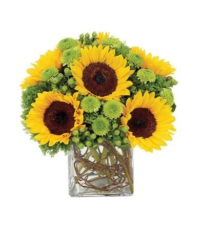 Sunflower Surprise Me