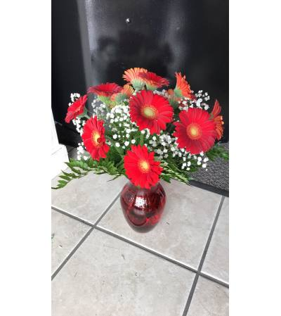 Celebrate! With Red Gerberas!