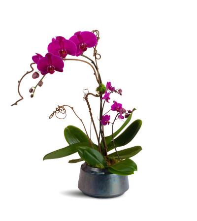 ModernTouch Orchids