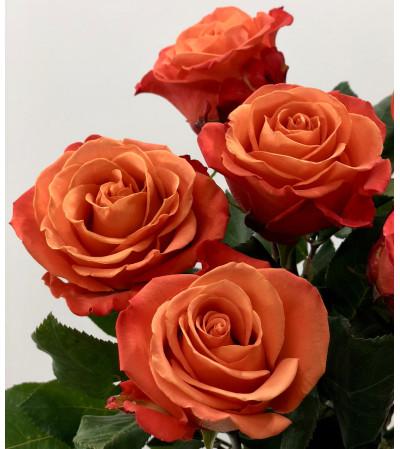 1 Dozen Premium Orange Roses