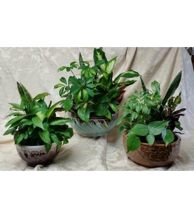 Ceramic Dish Garden Planters
