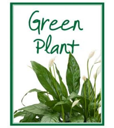 Green Plant Designer's Choice
