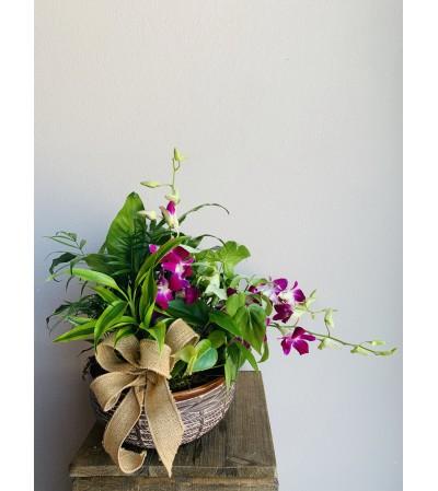 Sweet Planter