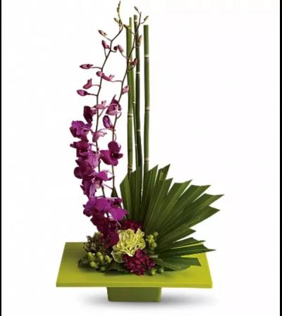 Zen Artistry Orchid