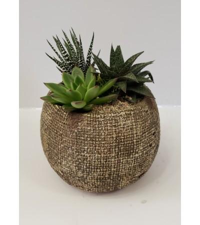 Succulent Inga Bowl