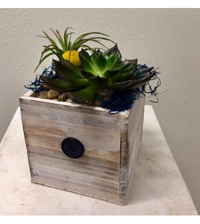 Tillandsia and Succulent