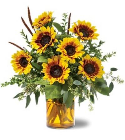 Sunrise Sunflowers TF