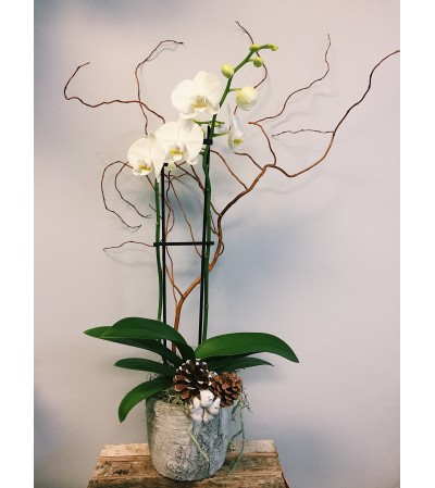Wildly Winter Orchid