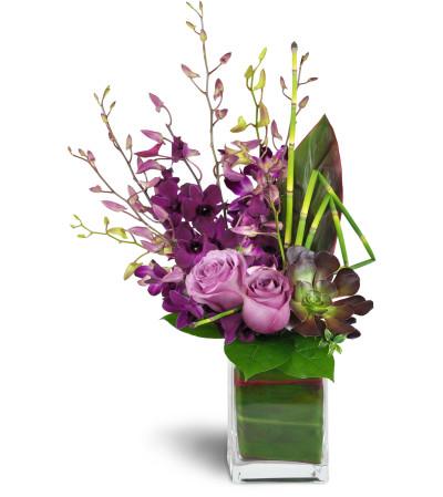Jenning's Orchid Jewels