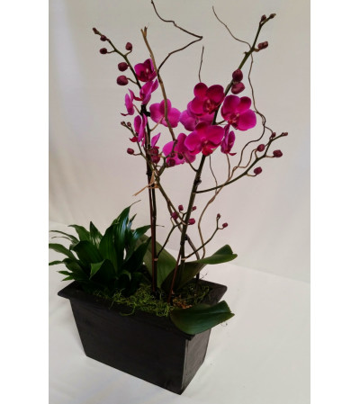 Special Orchid Deal of the Day