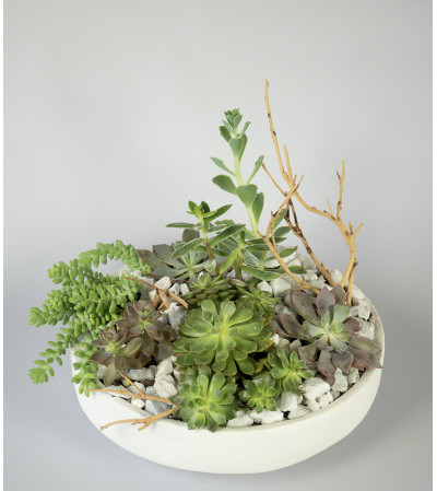 Luxuriant Succulents