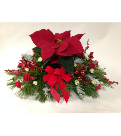 A Poinsettia Centerpiece