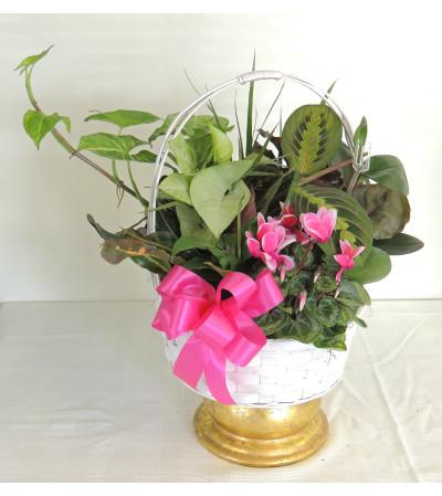 Blooming Basket Dishgarden