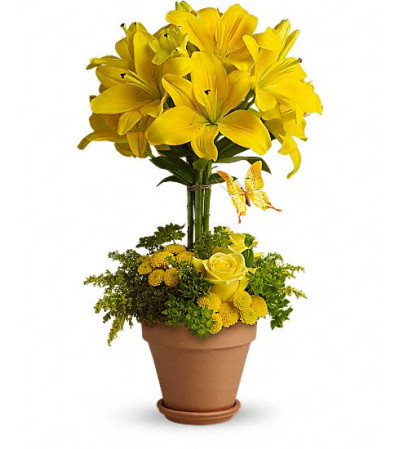 Yellow Fellow TF